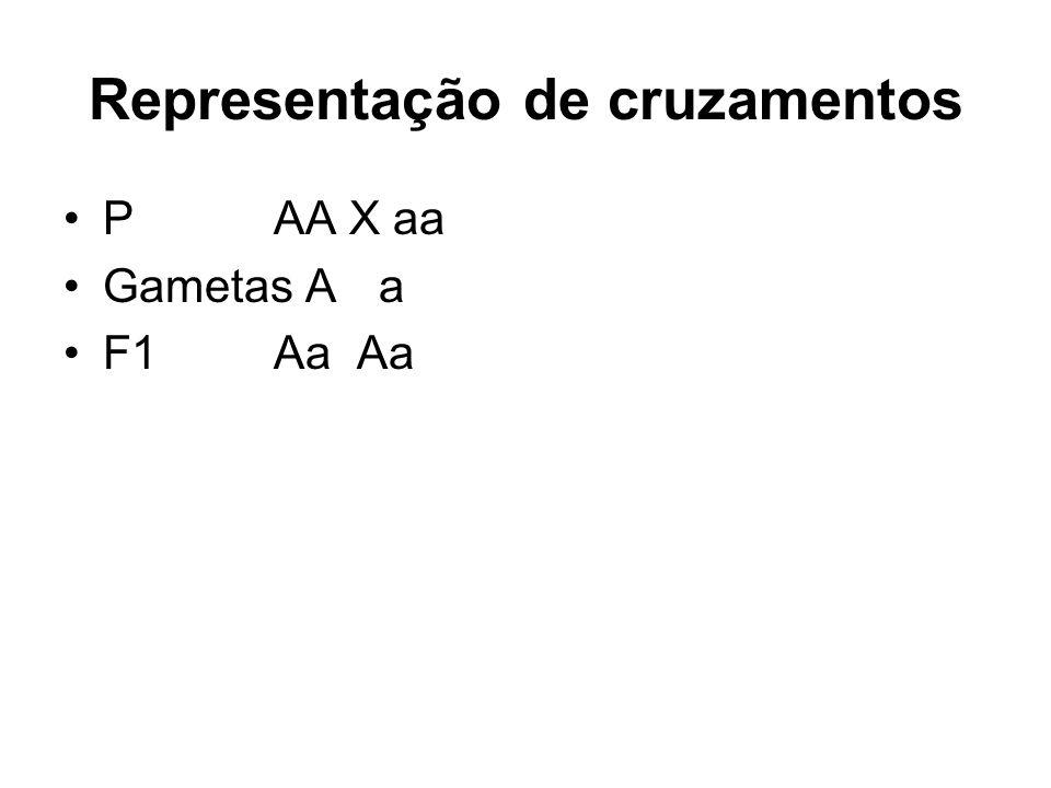 Representação de cruzamentos