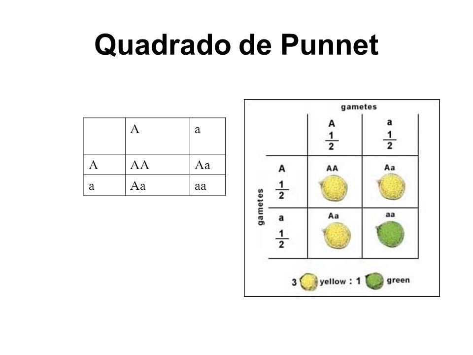 Quadrado de Punnet A a AA Aa aa