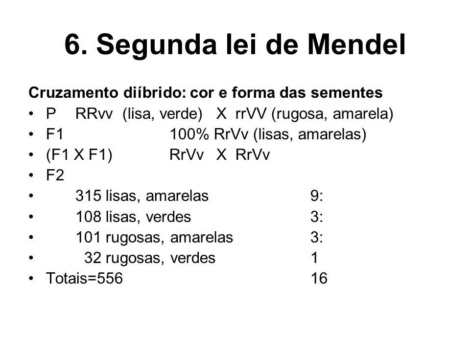 6. Segunda lei de Mendel Cruzamento diíbrido: cor e forma das sementes