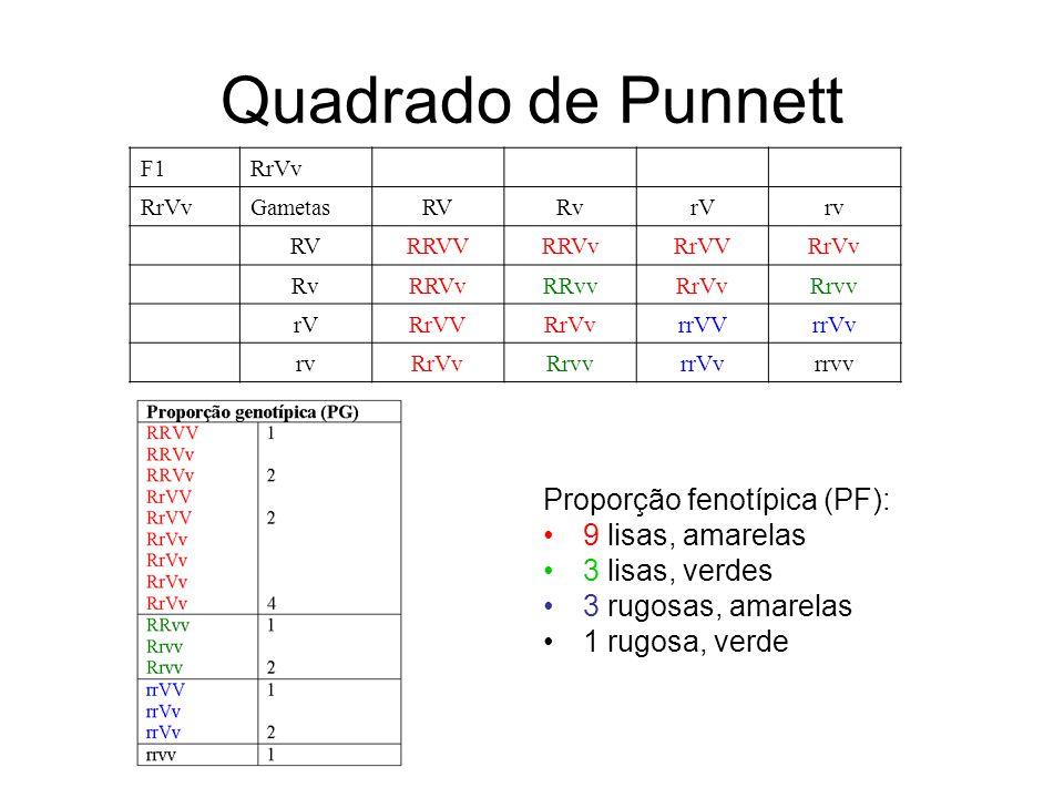 Quadrado de Punnett Proporção fenotípica (PF): 9 lisas, amarelas