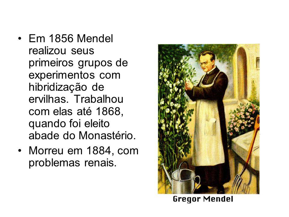 Em 1856 Mendel realizou seus primeiros grupos de experimentos com hibridização de ervilhas. Trabalhou com elas até 1868, quando foi eleito abade do Monastério.