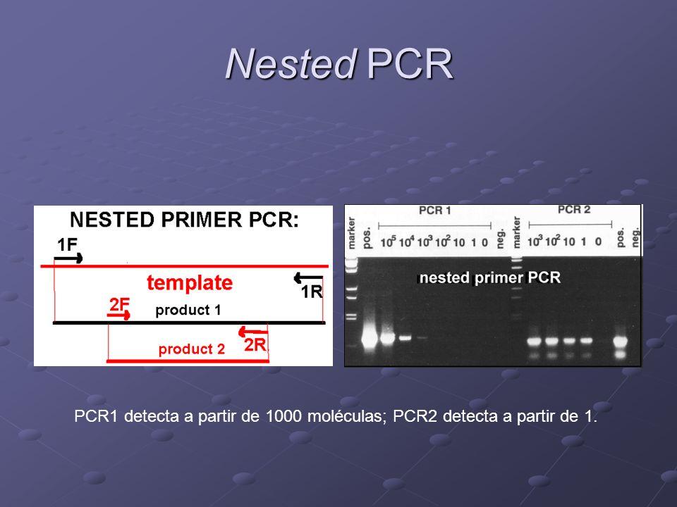PCR1 detecta a partir de 1000 moléculas; PCR2 detecta a partir de 1.