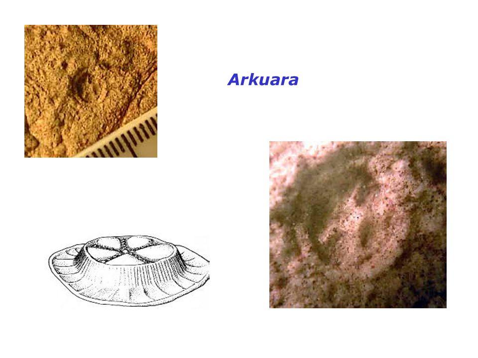 Arkuara