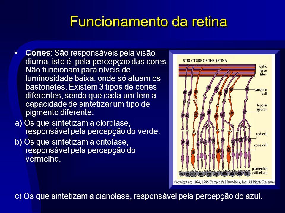 Funcionamento da retina