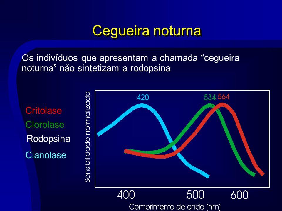 Cegueira noturna Os indivíduos que apresentam a chamada cegueira noturna não sintetizam a rodopsina.