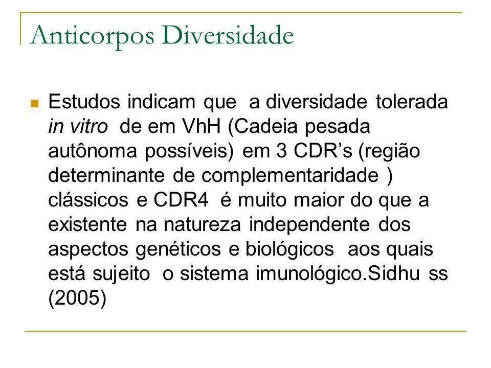 Anticorpos Diversidade