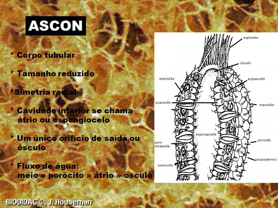 ASCON * Corpo tubular * Tamanho reduzido *Simetria radial