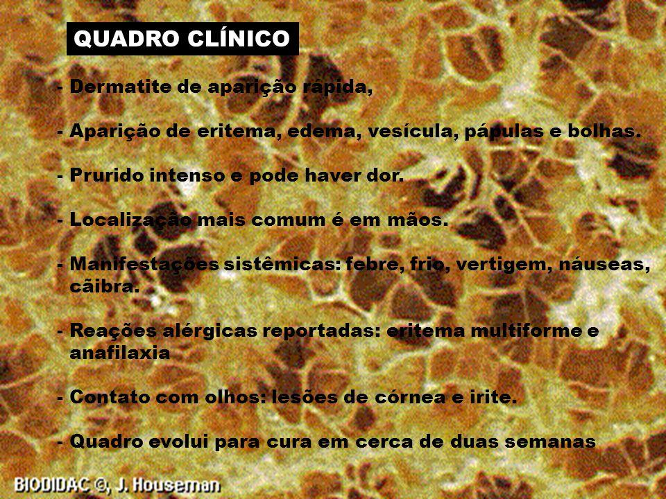 QUADRO CLÍNICO - Dermatite de aparição rápida,