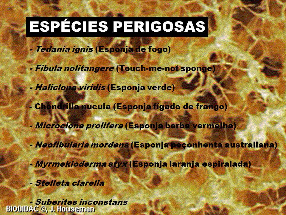 ESPÉCIES PERIGOSAS - Tedania ignis (Esponja de fogo)