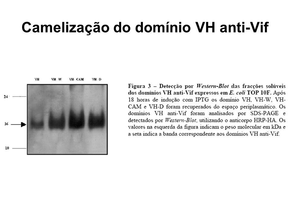 Camelização do domínio VH anti-Vif
