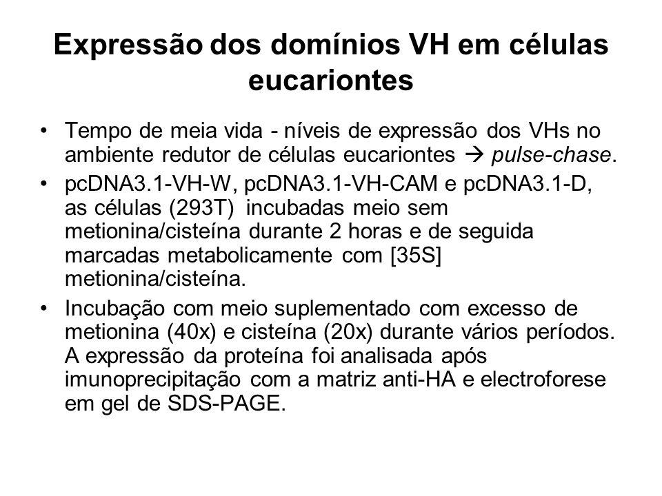 Expressão dos domínios VH em células eucariontes