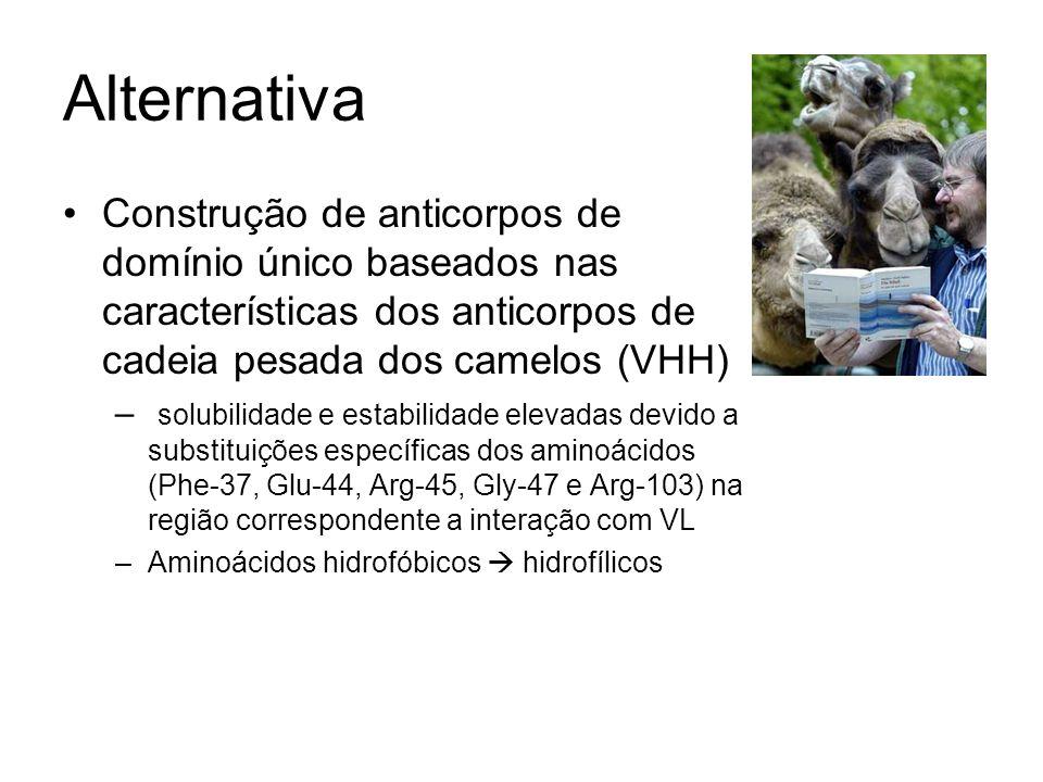 Alternativa Construção de anticorpos de domínio único baseados nas características dos anticorpos de cadeia pesada dos camelos (VHH)