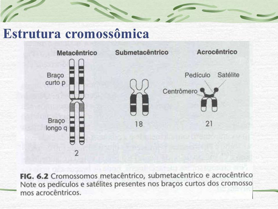 Estrutura cromossômica