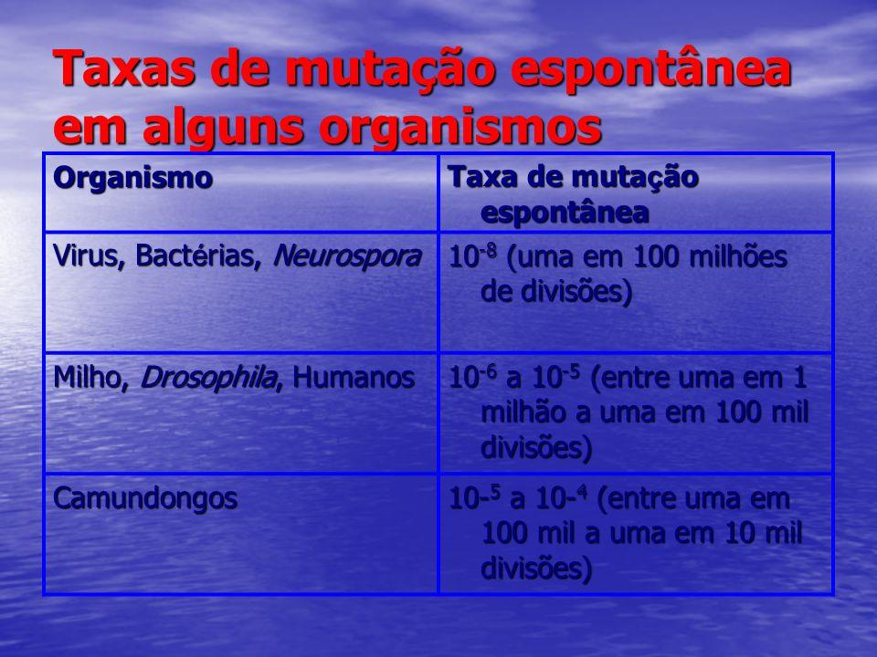 Taxas de mutação espontânea em alguns organismos