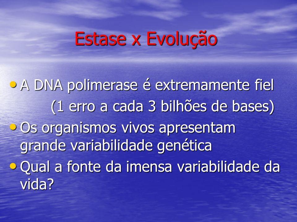 Estase x Evolução A DNA polimerase é extremamente fiel