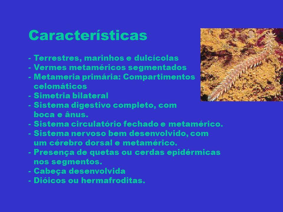 Características - Terrestres, marinhos e dulcícolas