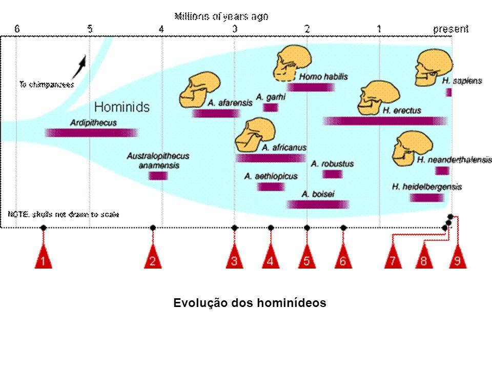 Evolução dos hominídeos