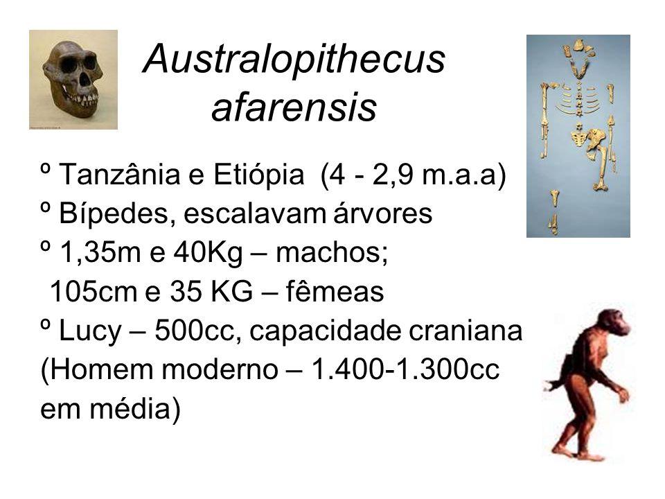 Australopithecus afarensis