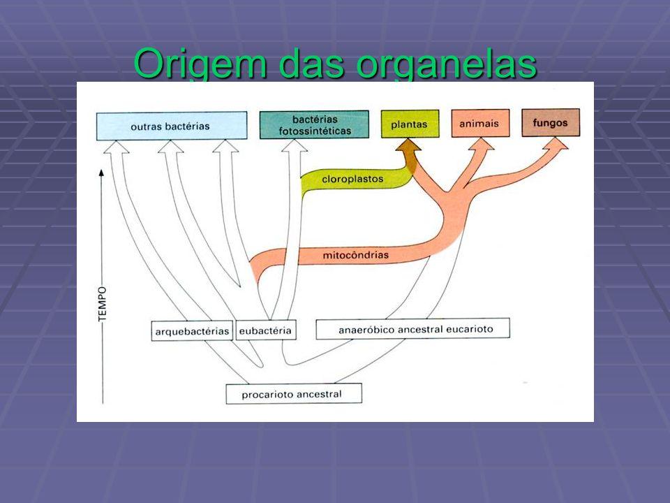 Origem das organelas
