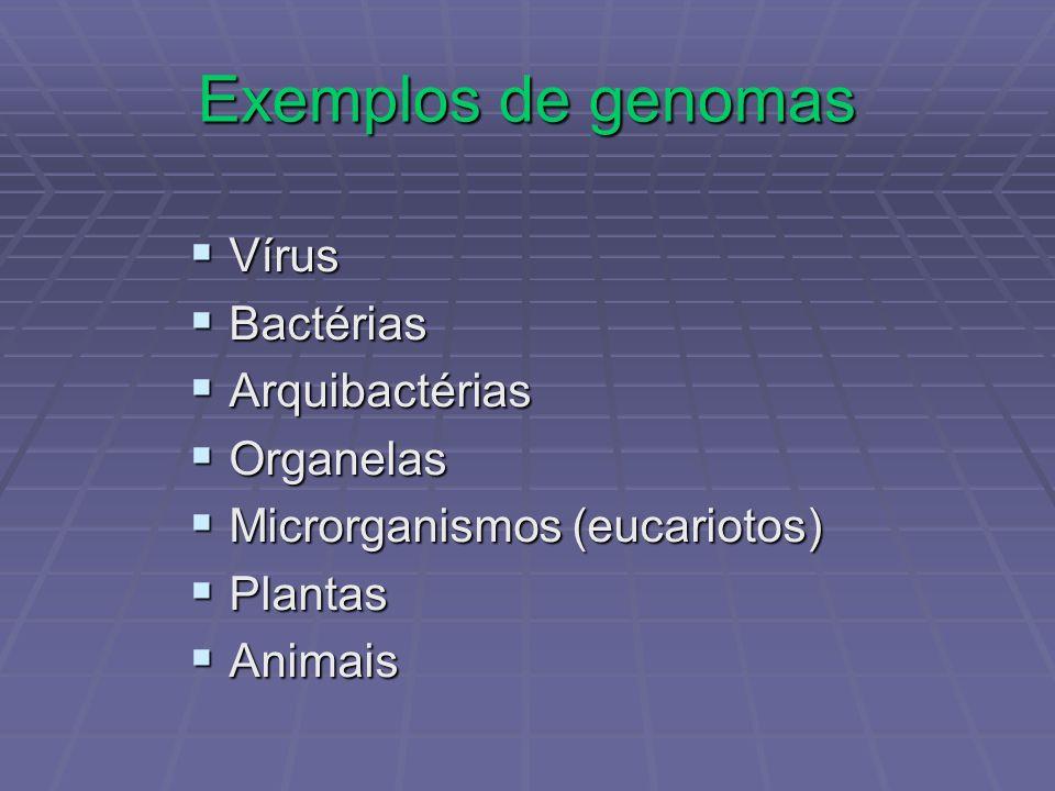 Exemplos de genomas Vírus Bactérias Arquibactérias Organelas