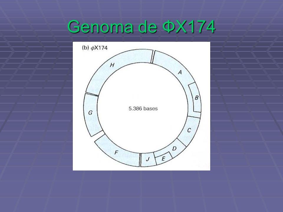 Genoma de ФX174