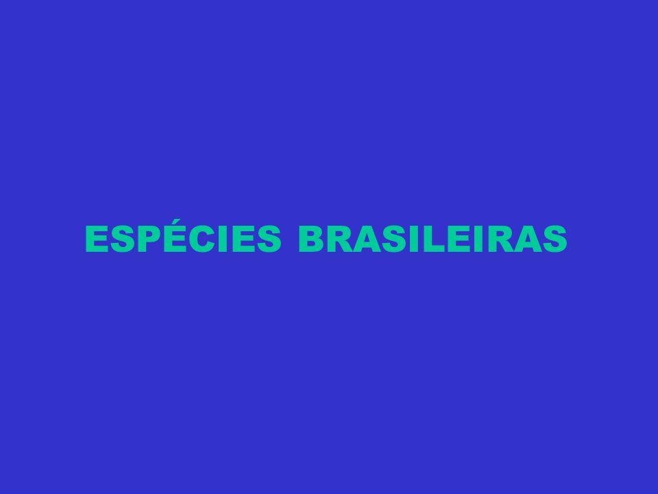 ESPÉCIES BRASILEIRAS