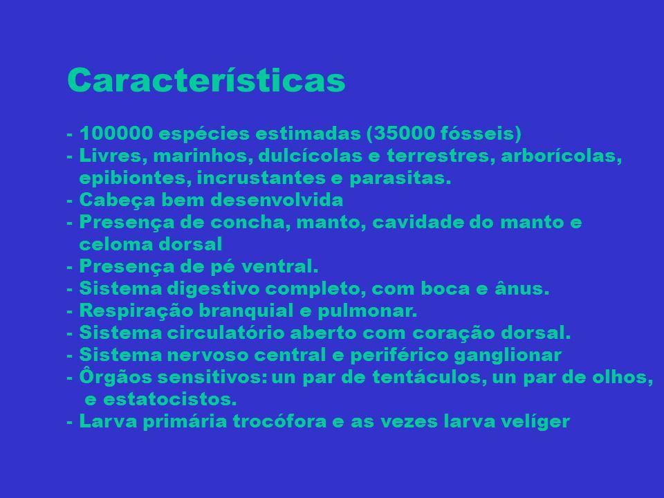 Características - 100000 espécies estimadas (35000 fósseis)