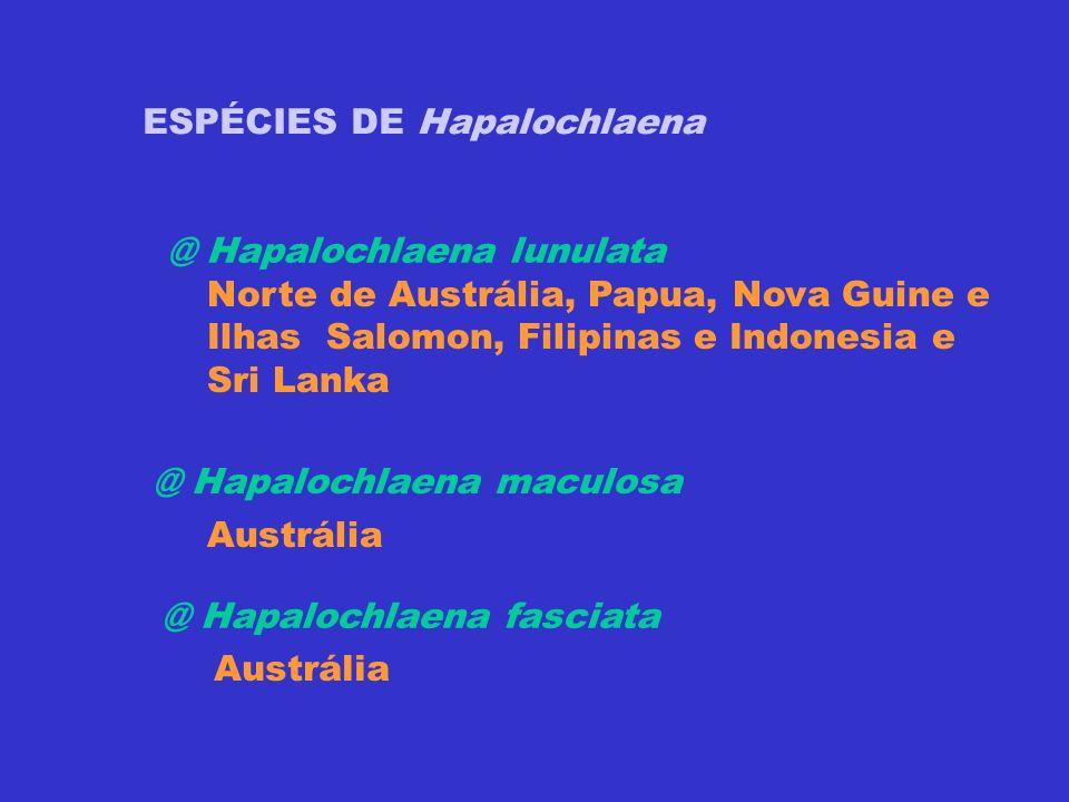 ESPÉCIES DE Hapalochlaena