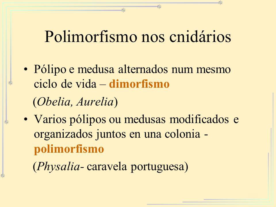 Polimorfismo nos cnidários