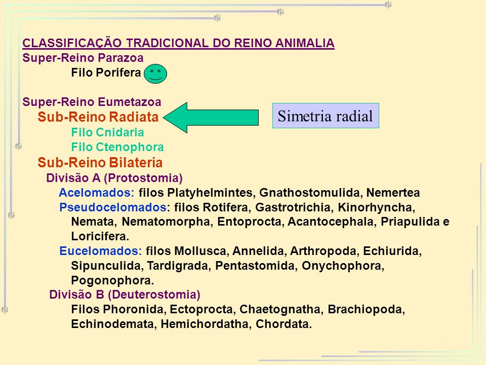 Simetria radial Sub-Reino Radiata Sub-Reino Bilateria
