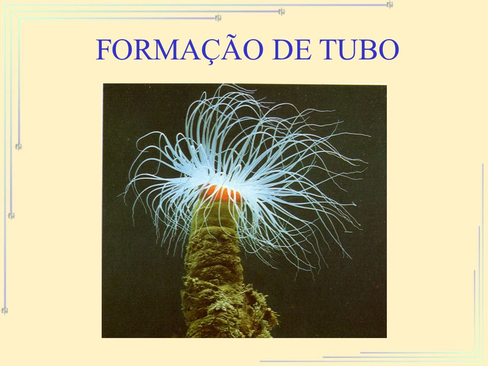 FORMAÇÃO DE TUBO