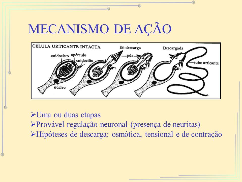 MECANISMO DE AÇÃO Uma ou duas etapas