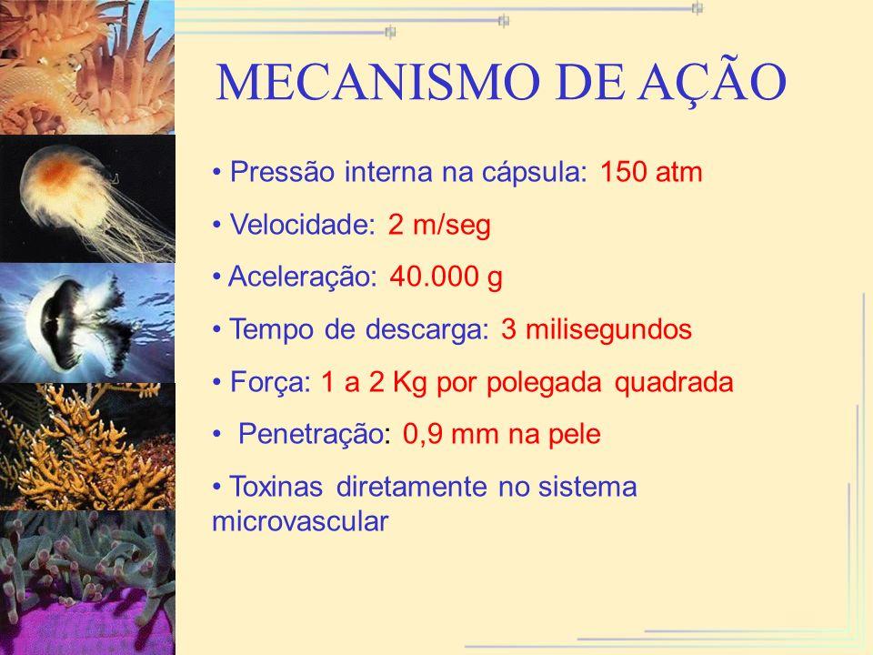 MECANISMO DE AÇÃO Pressão interna na cápsula: 150 atm