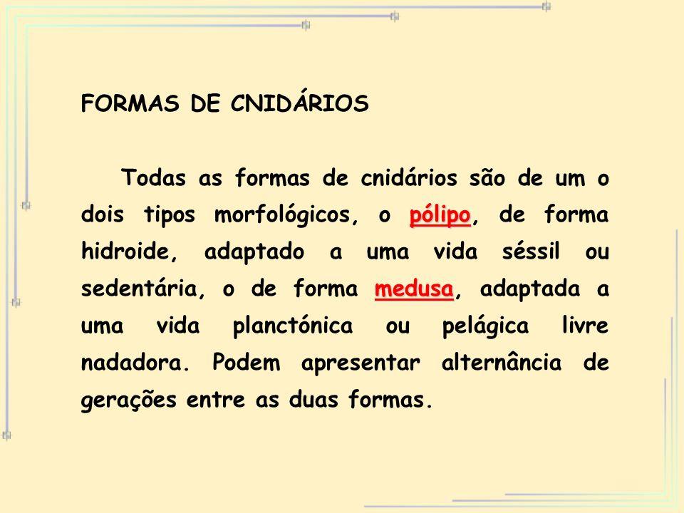 FORMAS DE CNIDÁRIOS
