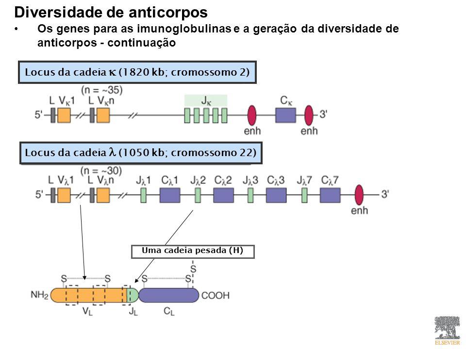 Diversidade de anticorpos