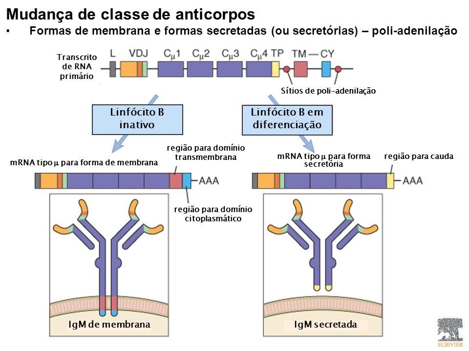 Mudança de classe de anticorpos