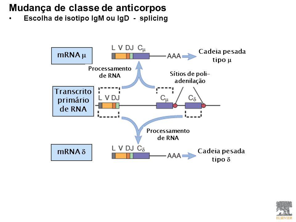 Sítios de poli-adenilação Transcrito primário de RNA