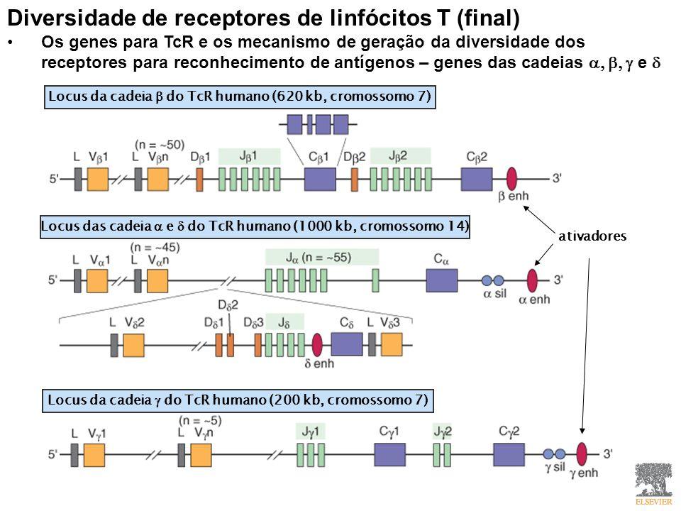 Diversidade de receptores de linfócitos T (final)