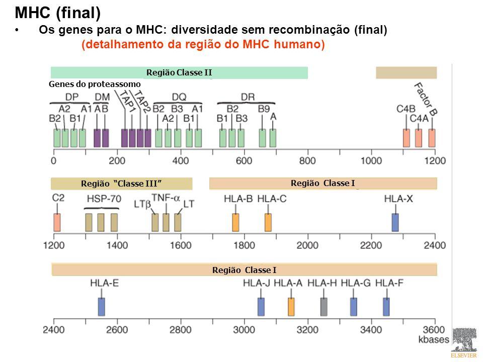 MHC (final) Os genes para o MHC: diversidade sem recombinação (final)