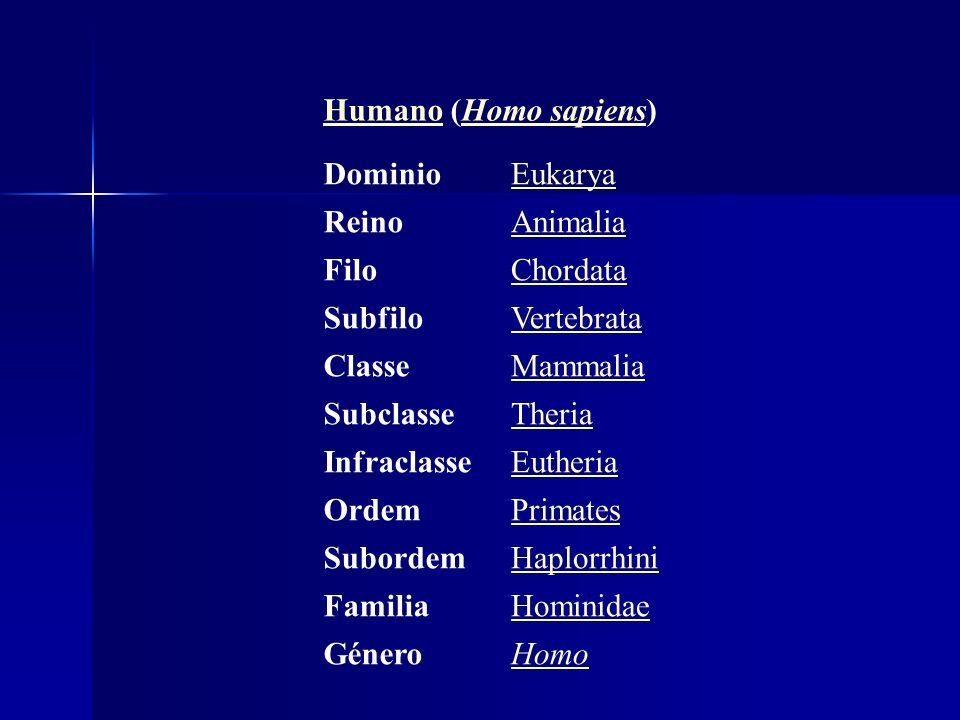 Humano (Homo sapiens) Dominio. Eukarya. Reino. Animalia. Filo. Chordata. Subfilo. Vertebrata.