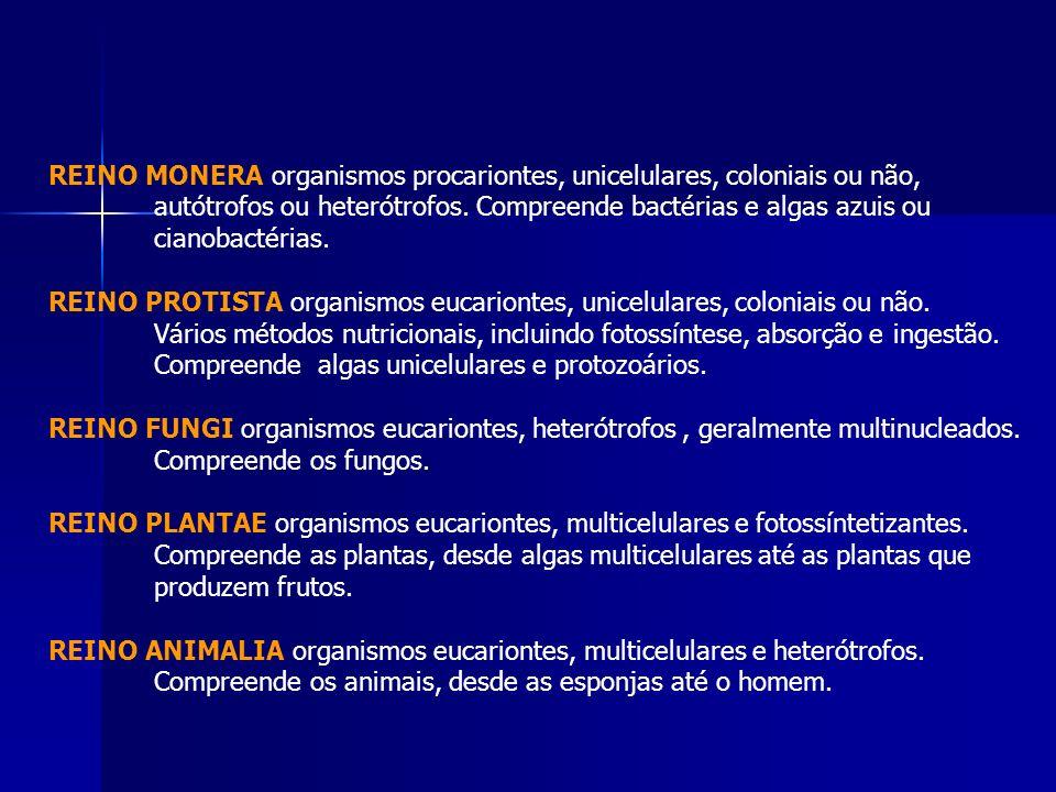 REINO MONERA organismos procariontes, unicelulares, coloniais ou não,