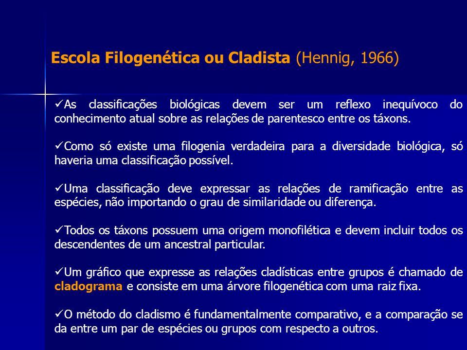Escola Filogenética ou Cladista (Hennig, 1966)