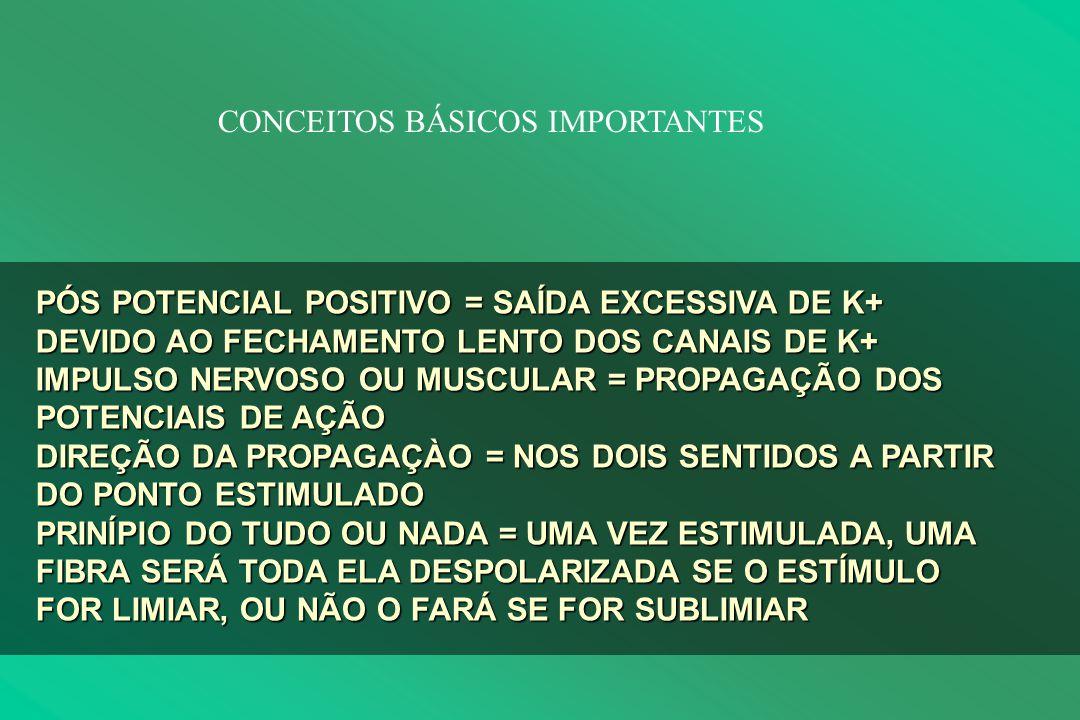 CONCEITOS BÁSICOS IMPORTANTES