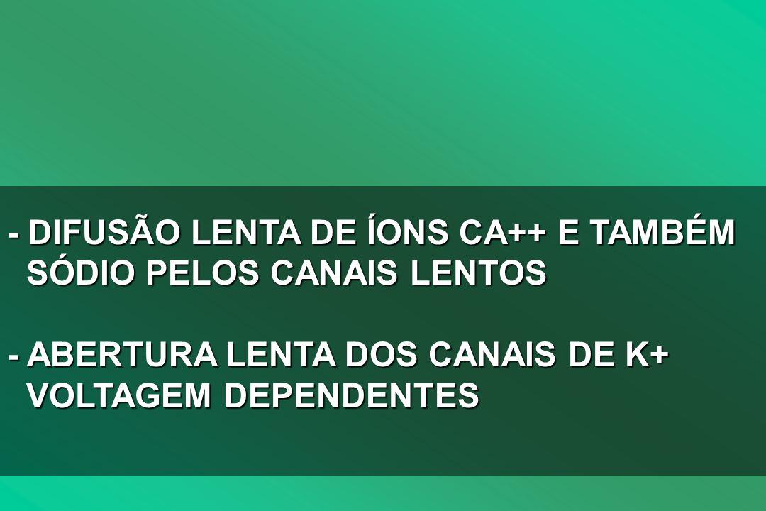 - DIFUSÃO LENTA DE ÍONS CA++ E TAMBÉM SÓDIO PELOS CANAIS LENTOS