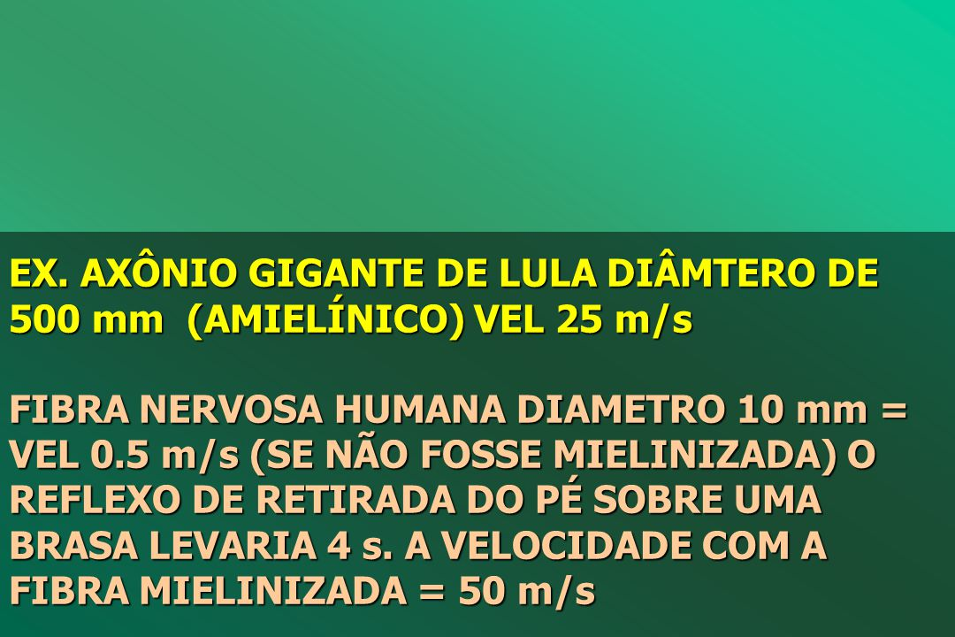 EX. AXÔNIO GIGANTE DE LULA DIÂMTERO DE 500 mm (AMIELÍNICO) VEL 25 m/s