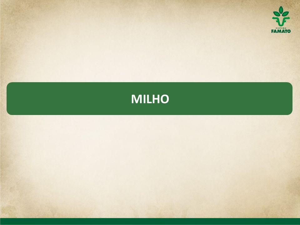MILHO