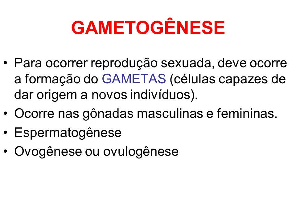 GAMETOGÊNESE Para ocorrer reprodução sexuada, deve ocorre a formação do GAMETAS (células capazes de dar origem a novos indivíduos).