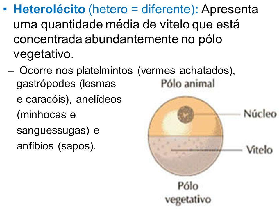 Heterolécito (hetero = diferente): Apresenta uma quantidade média de vitelo que está concentrada abundantemente no pólo vegetativo.