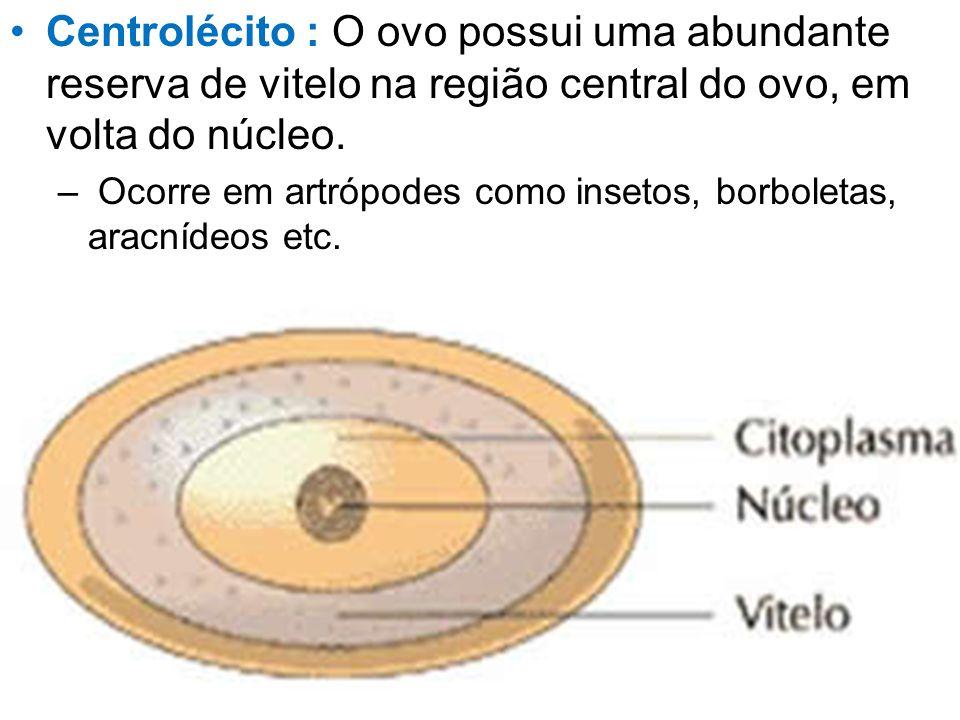 Centrolécito : O ovo possui uma abundante reserva de vitelo na região central do ovo, em volta do núcleo.