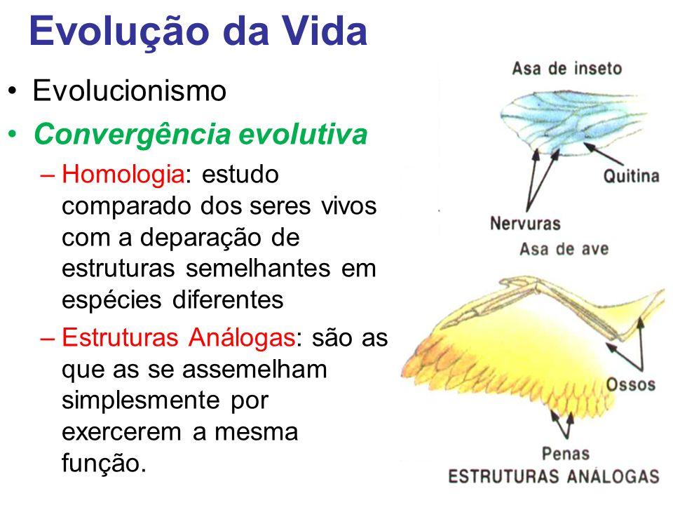 Evolução da Vida Evolucionismo Convergência evolutiva
